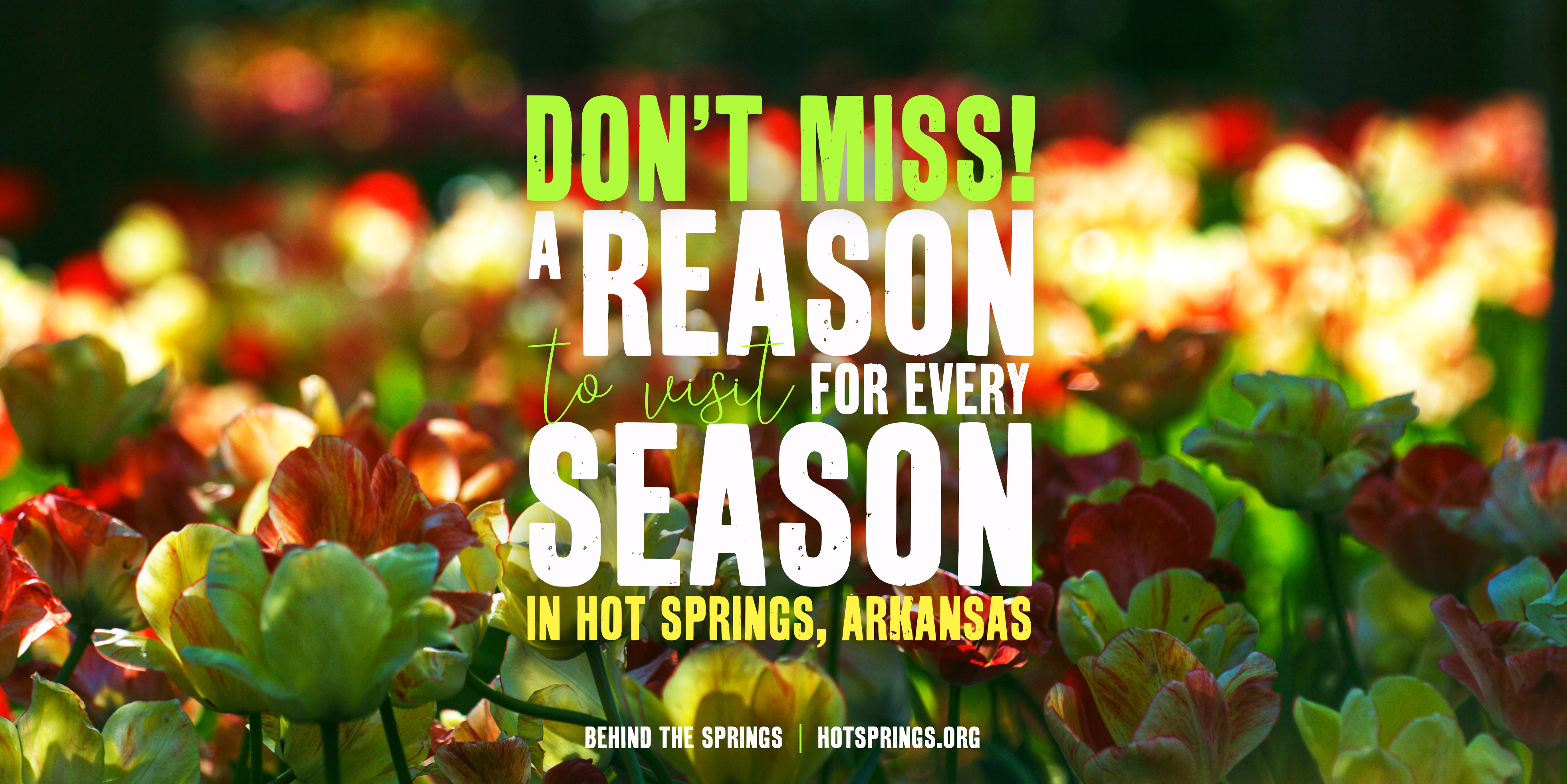 Behind the Springs Blog: Don't Miss!  A Reason to Visit for Every Season